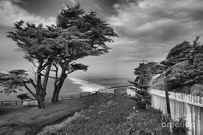 Photograph - Wind Blown At Point Reyes Black And White by Adam Jewell