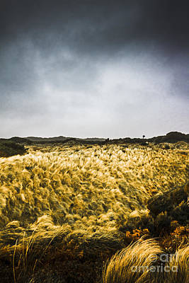 Turbulent Skies Photograph - Wind Blown Grassland  by Jorgo Photography - Wall Art Gallery