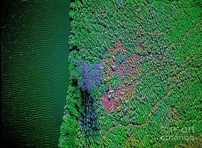 Wind Blown Marsh Tree And Water Art Print