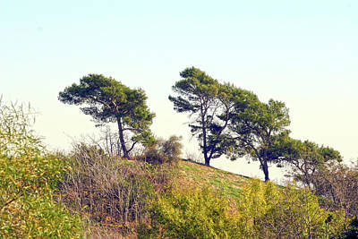 Wind Blown Trees Art Print