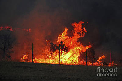 Photograph - Wildfire Flames by Bill Gabbert