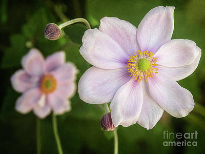 Photograph - Wind Flower by Kim Andelkovic