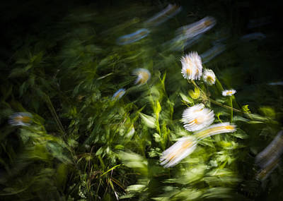 Photograph - Wind In The Flowers by Robert Potts