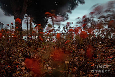 Photograph - Wind In The Roses by Marc Daly