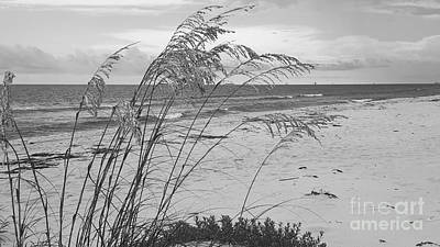 Photograph - Wind In The Sea Oats by Rachel Hannah