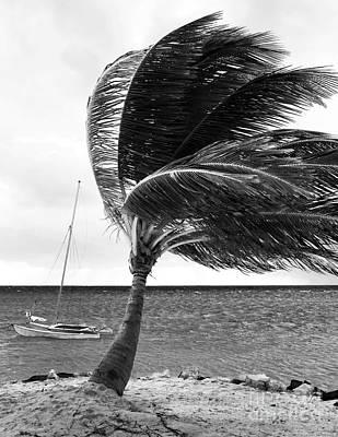 Photograph - Wind by John Rizzuto