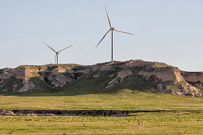Photograph - Wind Power And Wildlife by Tony Hake