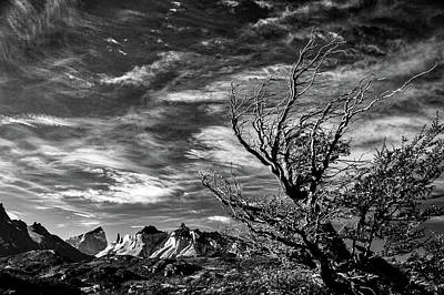 Photograph - Wind Shaped Tree #2 - Patagonia by Stuart Litoff