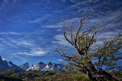 Photograph - Wind Shaped Tree - Patagonia by Stuart Litoff