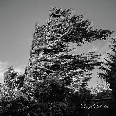 Photograph - Wind Shaped Tree by Roxy Hurtubise