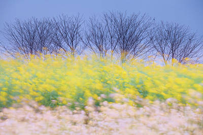 Photograph - Wind Strokes by Awais Yaqub