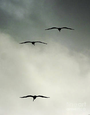 Photograph - Wind Surfers by Lizi Beard-Ward