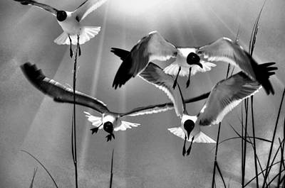 Art Print featuring the photograph Wind Swept Bw by Jan Amiss Photography