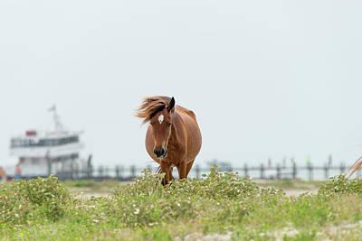 Photograph - Wind Swept Mane by Dan Friend