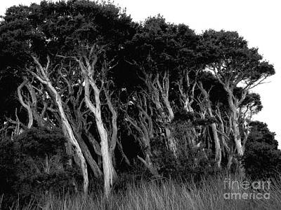 Photograph - Windblown Bw by Tim Richards
