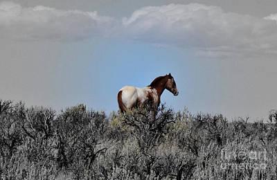 Photograph - Windblown by Debby Pueschel