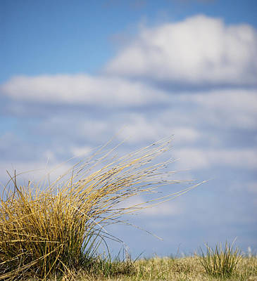 Windblown Grass In Great Smoky Mountains National Park Tennessee Art Print by Brendan Reals