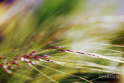 Photograph - Windblown Grass by Ray Laskowitz - Printscapes