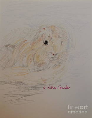 Windblown Drawing - Windblown Guinea Pig by N Willson-Strader