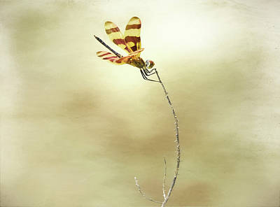 Tiger Dragonflies Photograph - Windblown by Steven Michael