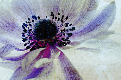 Windflower Art Print
