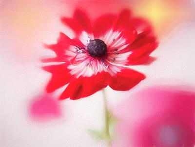 Photograph - Windflower In Spring by Usha Peddamatham