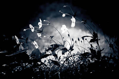 Limited Edition Photograph - Windflowers  by Maggie Terlecki