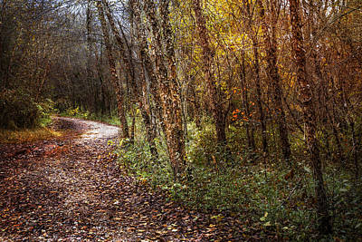 Winding Path Art Print by Debra and Dave Vanderlaan