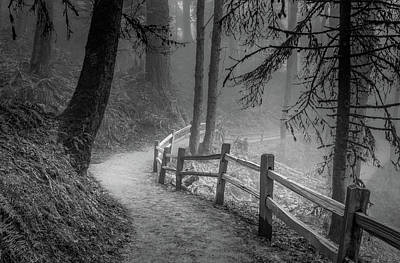 Photograph - Winding Path, Misty Forest by Don Schwartz
