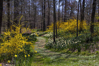 Photograph - Winding Path Through The Garden by Barbara Bowen