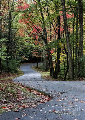 Photograph - Winding Road by Linda Mesibov