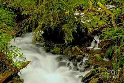 Photograph - Winding Through Moss, Rocks And Ferns by Adam Jewell