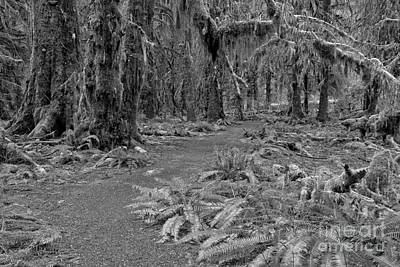 Photograph - Winding Through The Hoh In Black And White by Adam Jewell