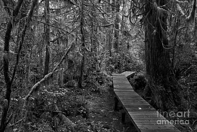 Photograph - Winding Through The Rainforest Black And White by Adam Jewell