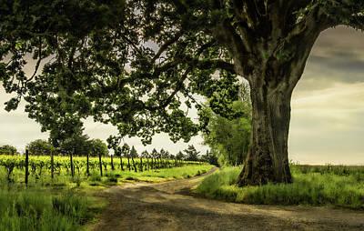 Photograph - Winding Through The Vineyard by Don Schwartz