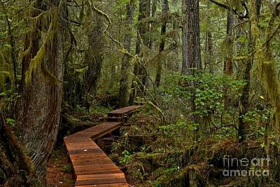 Photograph - Winding Through The Willowbrae Rainforest by Adam Jewell