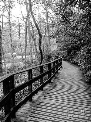 Wall Art - Photograph - Winding Wooden Path by Elaine J Hoffman