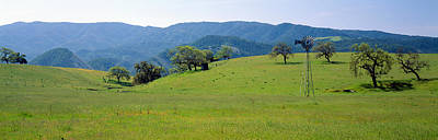 Featured Images Photograph - Windmill And Oak Trees In Spring by Panoramic Images