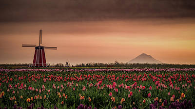 Photograph - Windmill And Tulips by Don Schwartz