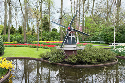 Photograph - windmill and tulips in dutch Keukenhof by Compuinfoto
