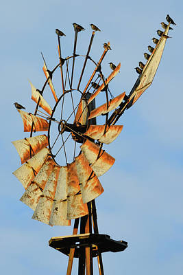 Photograph - Windmill Birds Rust by Tana Reiff