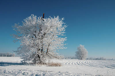 Photograph - Windmill In The Frost by David Arment