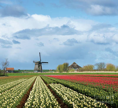 Photograph - Windmill With Tulip Flower Fields In The Countryside by IPics Photography