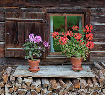 Photograph - Window And Geraniums by Yair Karelic