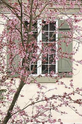 Photograph - Window Blossoms by Frank Townsley