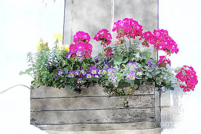Photograph - Window Box 5 by Donna Bentley