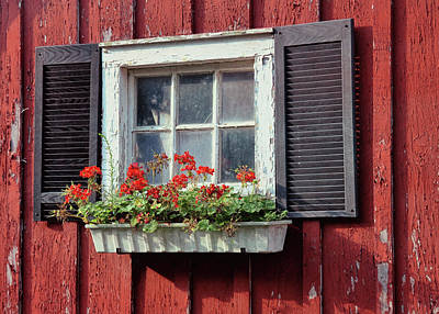 Window Box Art Print by Dressage Design
