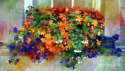Photograph - Window Box In Bath 2 by Judi Bagwell