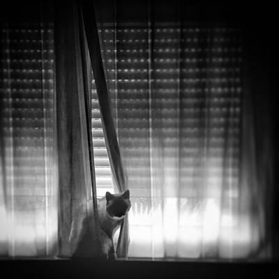 Pets Wall Art - Photograph - Window Cat by Rafa Rivas