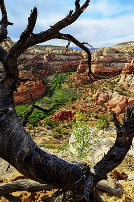 Canyon Photograph - Window by Chad Dutson
